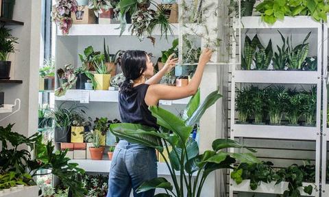 bisnis tanaman hias online