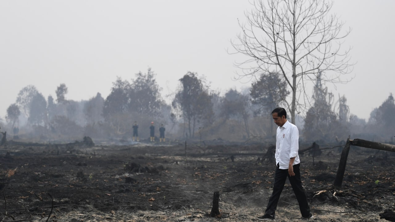 Presiden Joko Widodo, Tinjau Riau