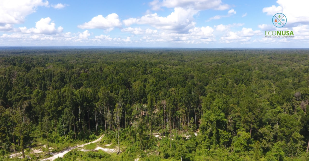 Hutan di tanah Papua