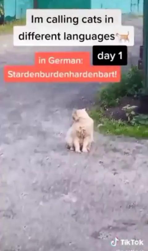 Eksperimen Panggil Kucing Dalam Berbagai Bahasa Mana Yang Bikin Si Pus Menengok Kumparan Com