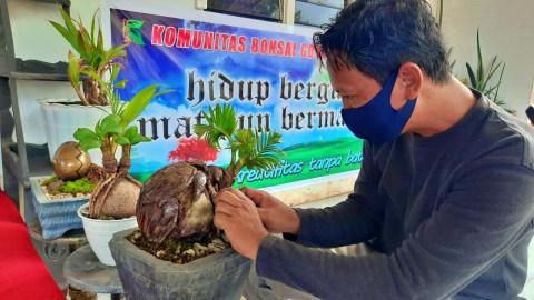 Bonsai Kelapa Bentuk Burung