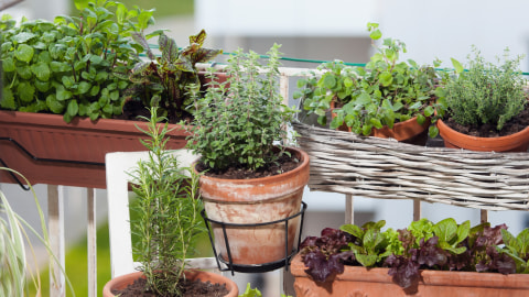 Ingin Tanaman Cepat Tumbuh Subur Lakukan 5 Tips Berkebun Ini Kumparan Com