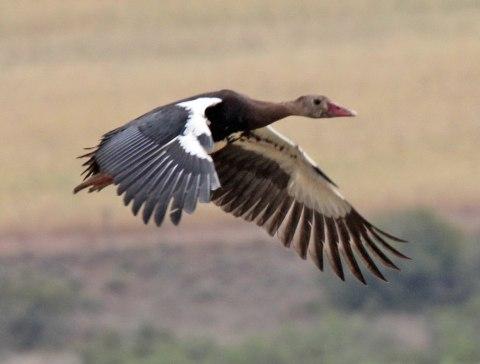 Yuk Berkenalan Dengan Burung Burung Tercepat Di Dunia Part 2 Kumparan Com
