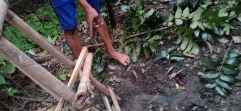 Warga Gunungkidul Tewas Terjatuh dari Pohon saat Cari Pakan Ternak