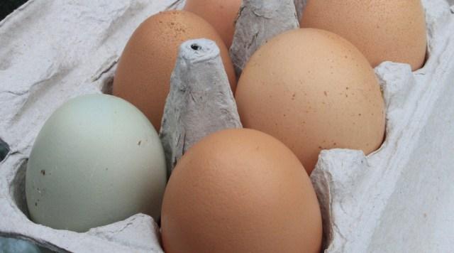 Bisa Dicoba! 5 Tips Memasak Telur yang Lebih Menyehatkan (17146)