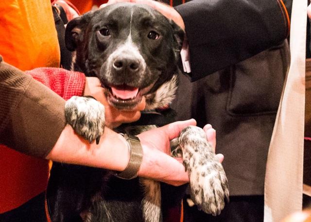 Riset: Pelihara Anjing Turunkan Risiko Serangan Jantung dan Stroke (35160)