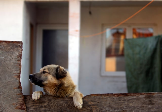 Sanksi Hukum Bagi Penelantar Anjing (252210)