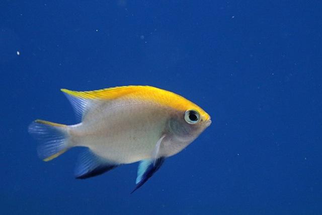 RI Ekspor Ikan Hias Rp 864,5 Miliar Selama 2016, Terbanyak ke AS (4054)