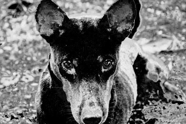 Apa yang Muncul Ketika Anjing Melolong? - kumparan com