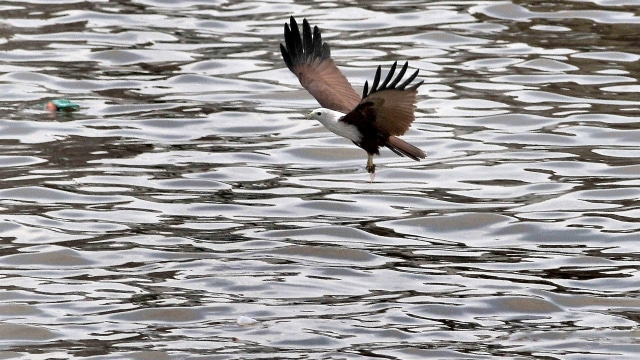 Stabilitas Sosial Politik Negara Berpengaruh pada Jumlah Burung Air (244852)