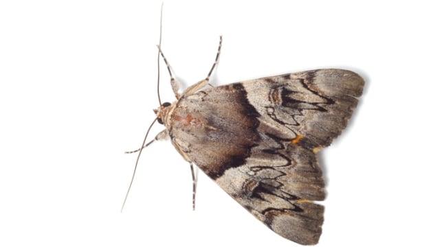Serangga Ini Pernah Bersarang di Tubuh Manusia (122488)