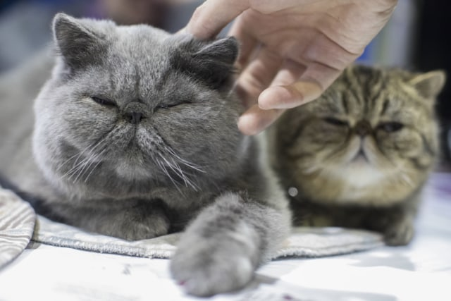 Unduh 99+  Gambar Tulisan Kucing Anggora Terlihat Keren HD