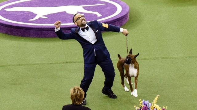 Anjing Berukuran Besar Lebih Pintar Dibanding Anjing Berukuran Kecil (343821)
