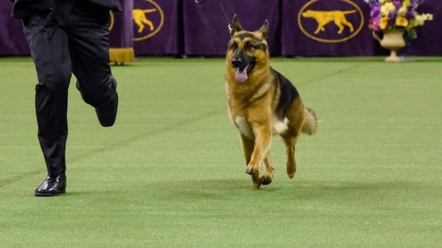Anjing Berukuran Besar Lebih Pintar Dibanding Anjing Berukuran Kecil (343822)