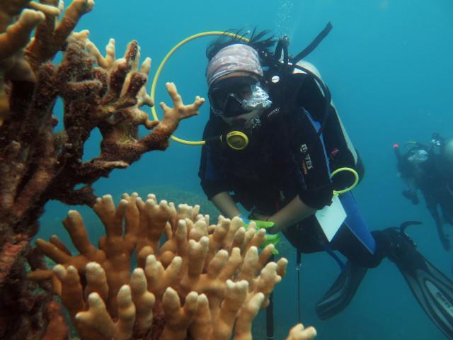 Teknik - teknik yang Wajib Dikuasai Penyelam (946972)