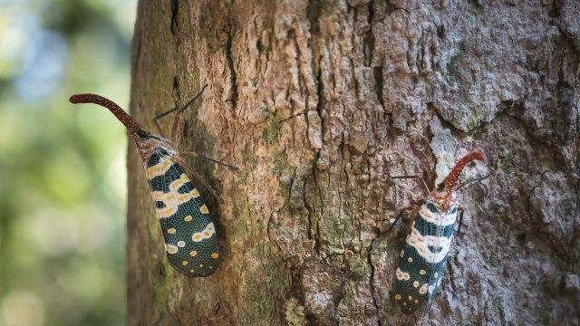 Gara-gara Pestisida, Sejumlah Spesies Serangga Terancam Punah (251134)