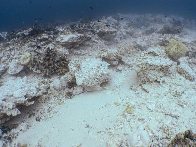 Terumbu Karang Pulau Kri