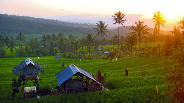 Jokowi Bakal Naikkan Anggaran Dana Desa Jadi Rp 73 T di 2019 (461961)