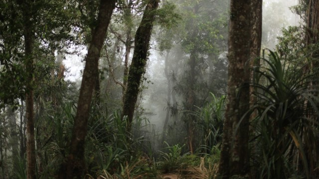 2017 Jadi Tahun Kehilangan Luas Hutan Dunia Terparah Kedua  (1134929)
