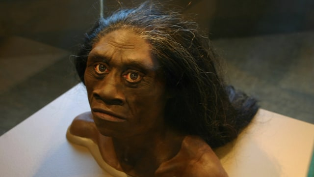 Homo Floresiensis Manusia Kerdil Tertua Di Indonesia Kumparan Com
