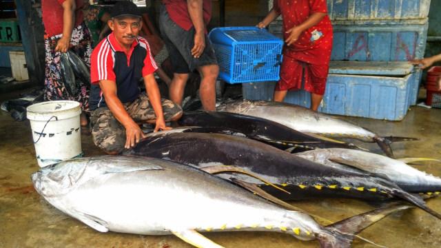 Ikan Tuna di Laut Bone