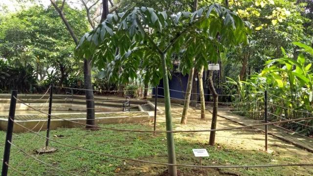 Proses vegetatif bunga bangkai
