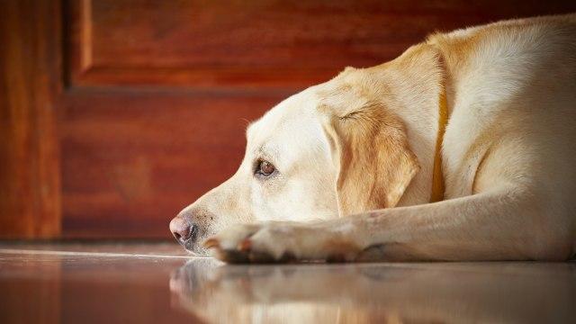 Anjing Sendirian