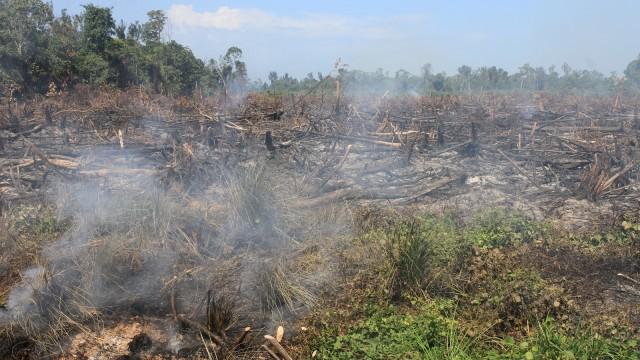 Lahan di Riau Terbakar Lagi, Diduga Sengaja Dibakar (41869)