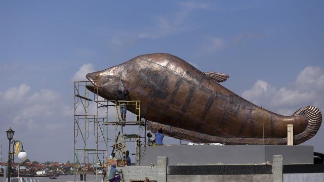 Unduh 107 Gambar Foto Ikan Belida Terpopuler