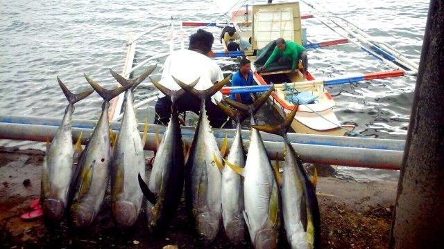 Hasil Ikan di Dagho Pulau Sangihe Melimpah