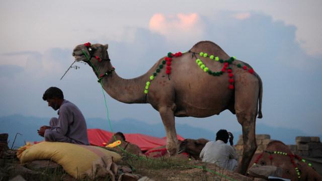 Dari China hingga Maroko, Begini Uniknya Tradisi Idul Adha Di Berbagai Negara (140105)