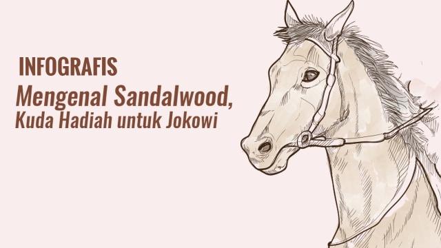 Mengenal Sandalwood, Kuda Hadiah Warga NTT untuk Jokowi (189770)