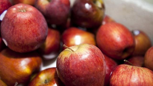 Kaya Antioksidan & Bikin Awet Muda, Ini Manfaat Baik Apel Bagi Tubuh (589679)
