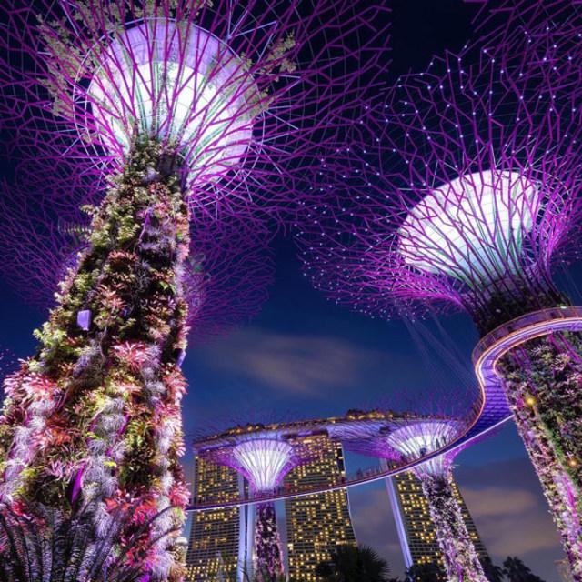 Mengintip Garden By The Bay Singapore Rumah Dari 1 5jt Jenis Tanaman Kumparan Com