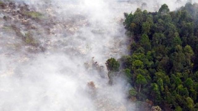 Mengapa Angka Kebakaran Hutan Indonesia di 2017 Turun Drastis? (1175542)