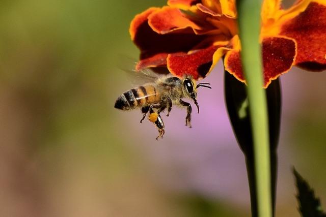 Gara-gara Pestisida, Sejumlah Spesies Serangga Terancam Punah (251133)