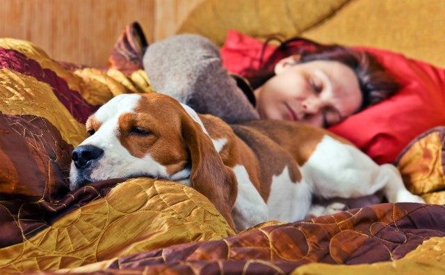 Sanksi Hukum Bagi Penelantar Anjing (252211)