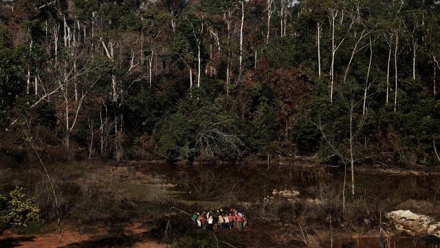 2017 Jadi Tahun Kehilangan Luas Hutan Dunia Terparah Kedua  (1134930)