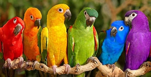Burung Kakak tua Tidak Hanya Meniru Cara Bicara - kumparan.com