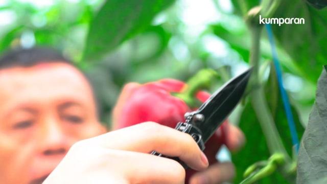 Ecofarming untuk Warga Cianjur (41713)