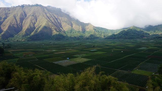 Persawahan di Desa Beleq, Sembalun, Lombok