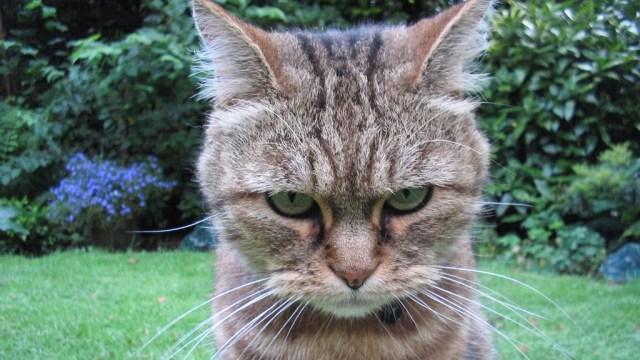 Download 76+  Gambar Kucing Yang Sedang Makan Paling Keren Gratis