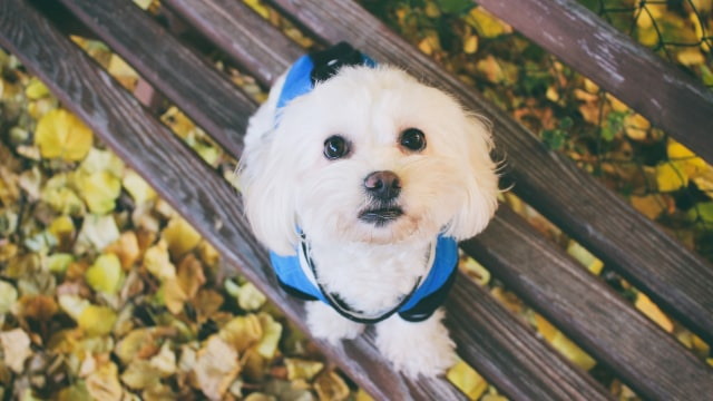 Anjing Berukuran Besar Lebih Pintar Dibanding Anjing Berukuran Kecil (343820)