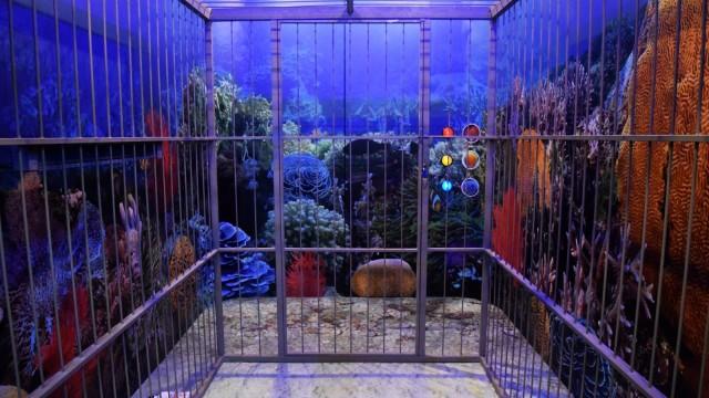 SOS from the Deep, Escape Room Bertema Laut Pertama di Dunia (480693)