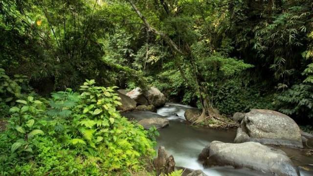 10 Restoran di Bali dengan Pemandangan Menakjubkan (89956)