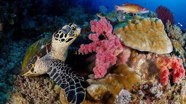 Pemandangan bawah laut Pulau Tunda, Banten