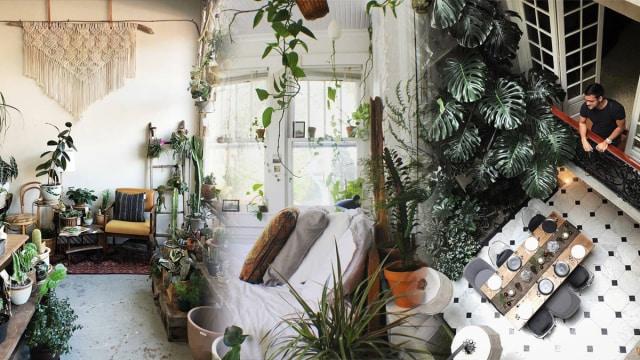 Kombinasi tanaman dan interior rumah
