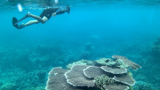 Snorkeling di Pulau Penjalin, Anambas
