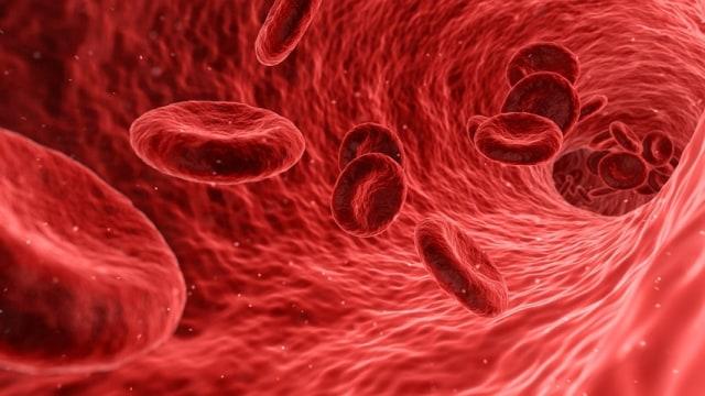 Ilustrasi darah