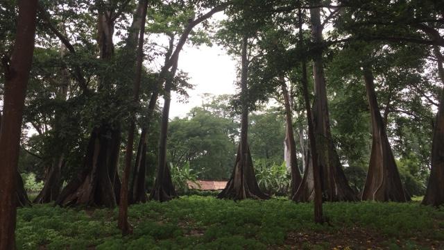 Kawasan hutan purba